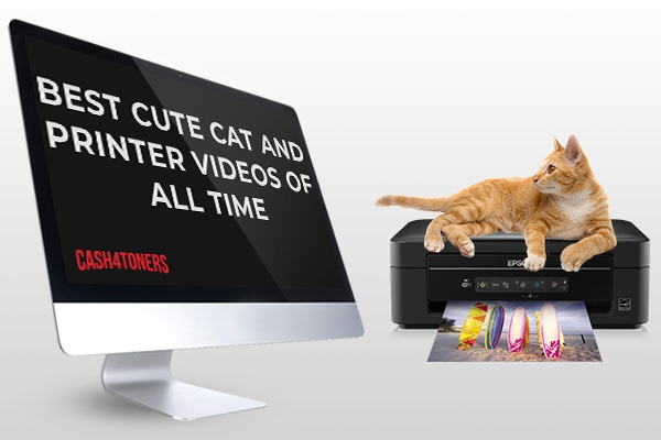 Best Cute Cat and Office Printer Videos Of All Time!